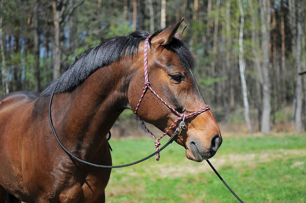 Halter soft with reins