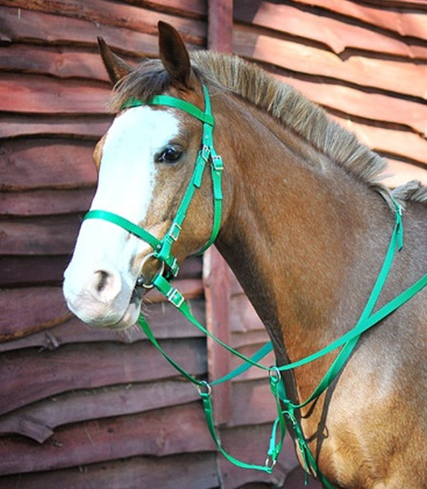 Bridle with martingale ZW
