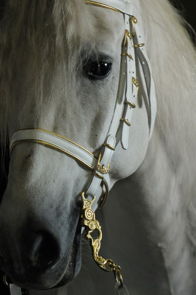 White bridle with undercoat