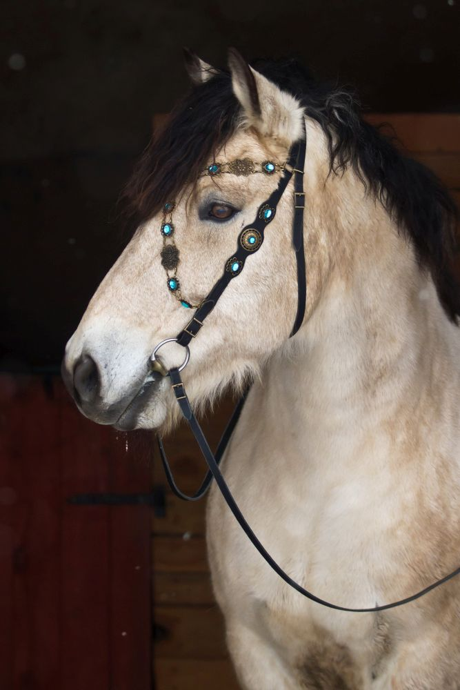 Bridle BLUE Baroque X plus