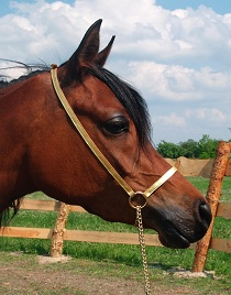 Simple leather showbridle