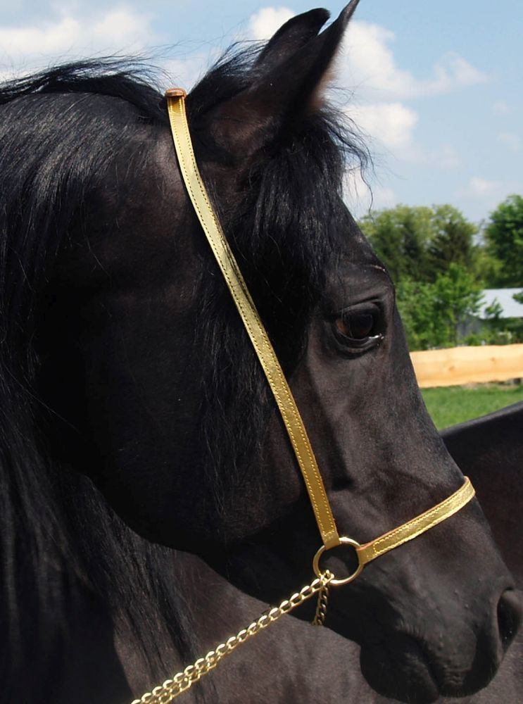 Leather nosebands